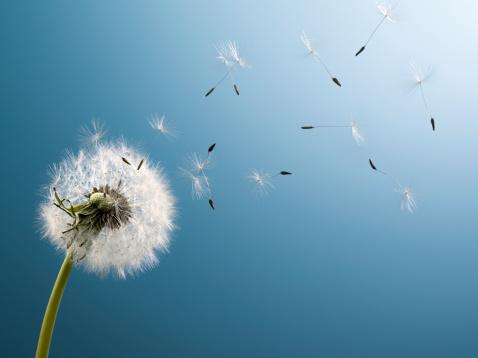 Желания на вятъра